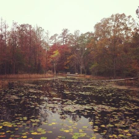 Houston, TX: swampland