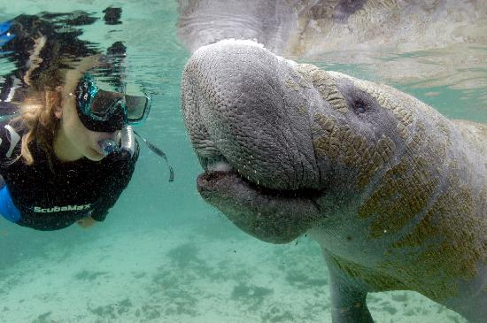 Crystal River, FL: My Almost Manatee Kiss!