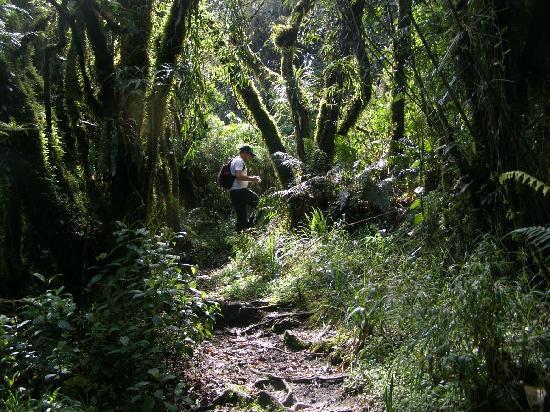 Pasochoa Forest Reserve: Tupido bosque en el recorrido del Pasochoa