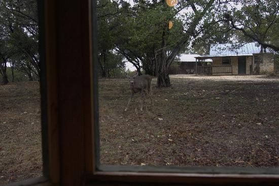 Mayan Dude Ranch: Deer ourside our cabin window