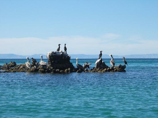 Balandra Beach : pelicans cormorants etc sitting on only rock in bay