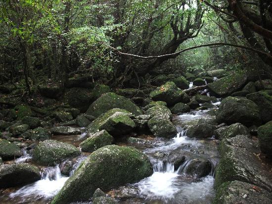 Kumage-gun Yakushima-cho, اليابان: 水がきれいです。
