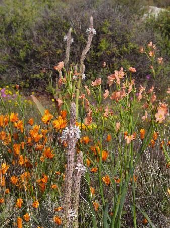 Namaqualand: Da sind nicht nur Margeriten