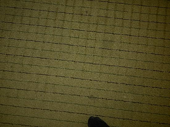 Jameson Suites Augusta: Filthy carpet throughout