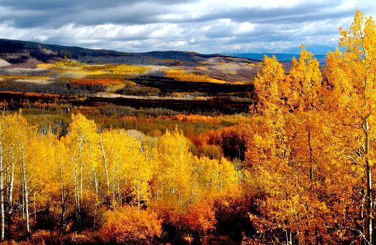 Grand Mesa: Fall from Land O Lakes - Photo Steve Huntley