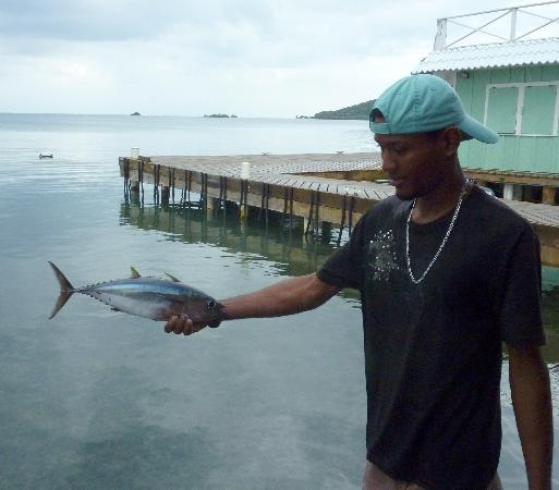 Mango Creek Lodge: Our fishing guide was passionate about his job. He caught this tuna before work one morning.