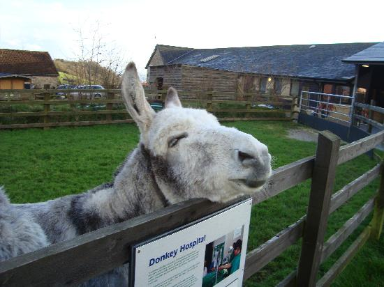 The Donkey Sanctuary: sweet donkey