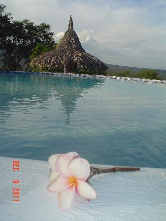 Hacienda Puerta Del Cielo Eco Spa: The national flower of Nicaragua - thanks, Mauricio!