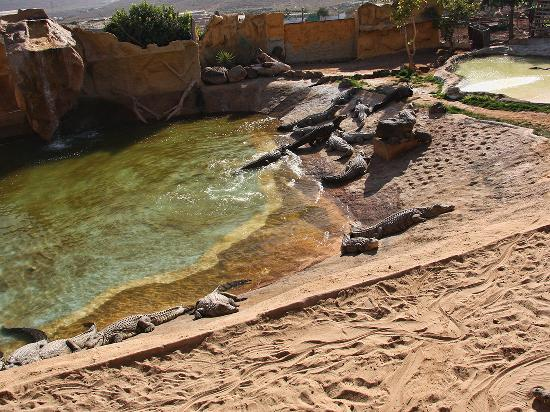 Cocodrilo Park Gran Canaria : Of of many crocodile areas - this one is biggest