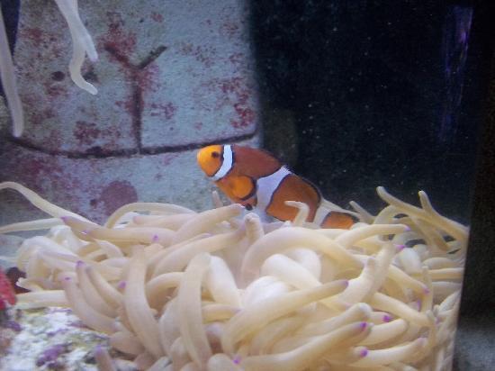 Marine Habitat at Atlantis: Found Nemo