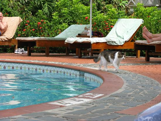 The resort 'employes' cats to entertain the guest and keep pests at bay.