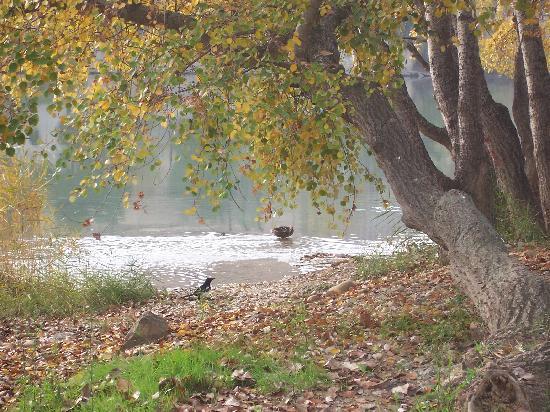 El Ebro : Wildlife under Stone Bridge