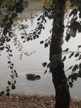 El Ebro: Duck's Lunchtime
