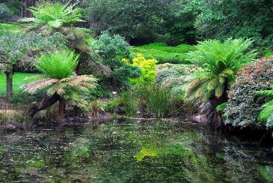 Dandenong, Australia: The lakes are a feast for the eyes