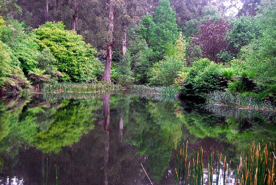 Dandenong, Australië: The magic of the ponds