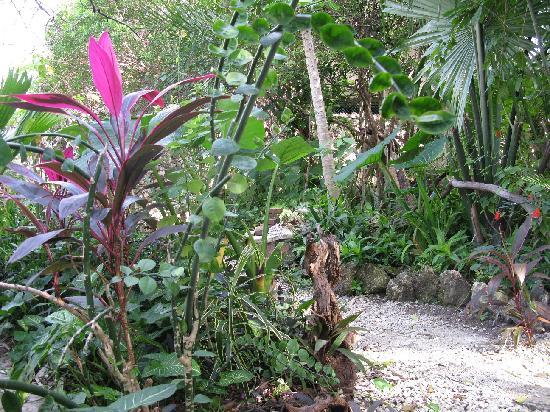 Aerolito Tulum: Small garden at Aerolito