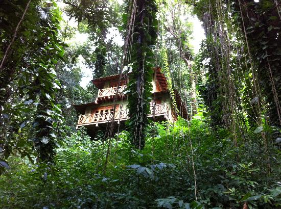 Kanopi House: A cabin higher up