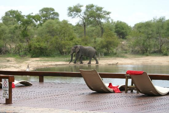 Gomo Gomo Game Lodge: Pool deck view