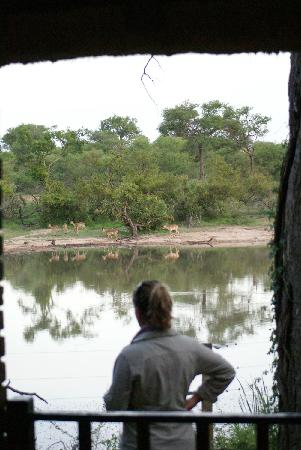 Gomo Gomo Game Lodge: View of waterhole from room #3