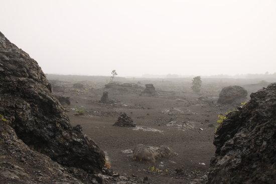 Pu'u Huluhulu trail