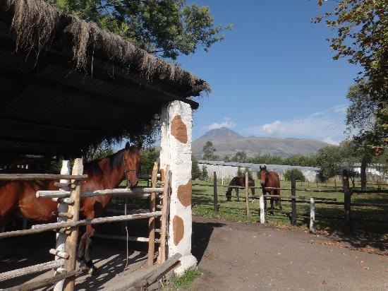 Hosteria-PapaGayo South: horse stables