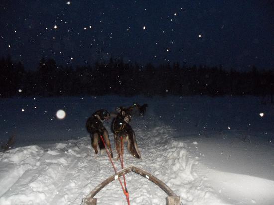 Lapland Hotel Akashotelli: huskies