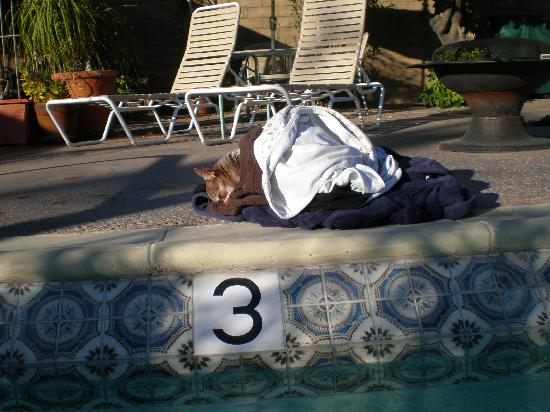 Little Paradise Hotel: Boo sleeps by the pool.