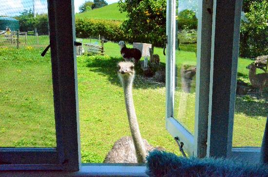 Waitomo Big Bird Bed & Breakfast: Victoria and her companions
