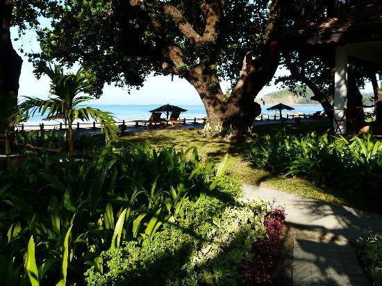 Thande Beach Hotel: Jardin luxuriant