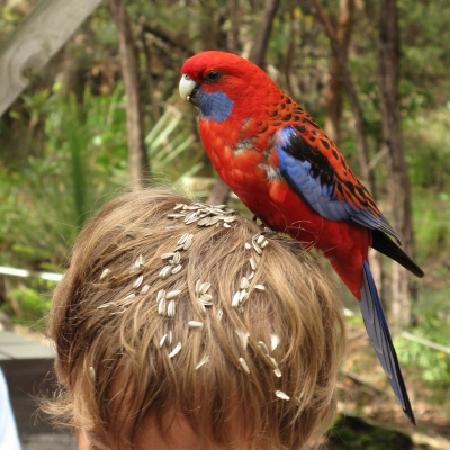 Jemby-Rinjah Eco Lodge: Bird feeding