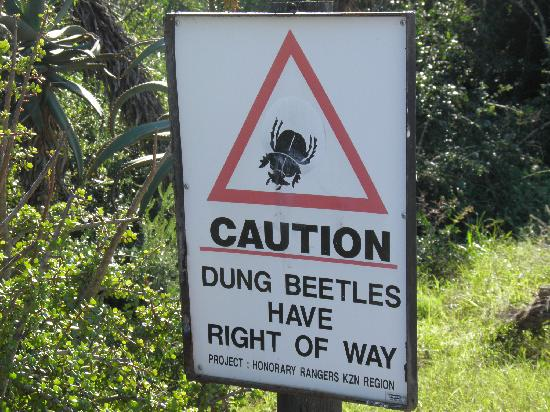 Dungbeetle River Lodge: Road Sign