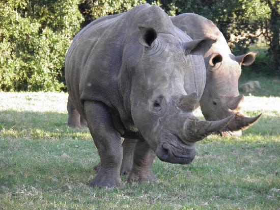Dungbeetle River Lodge: Rhino
