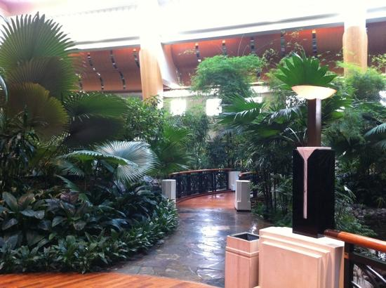 Grand Hyatt Dubai : tropical garden infront of market cafe