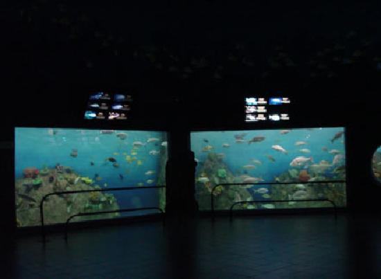 Aquarium of Veracruz: disfrutalo!!!!!