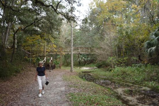 Suspension Bridge Picture Of Ravine Gardens State Park Palatka Tripadvisor