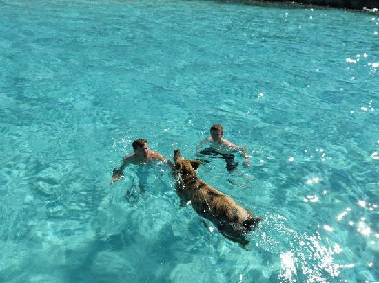 St Francis Resort: Swimming with the pigs near Staniel Cay