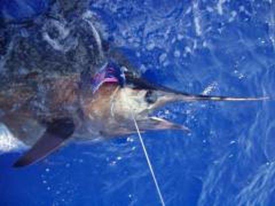 Kona hawaii fishing with capt jeff rogers kailua kona for Deep sea fishing seattle