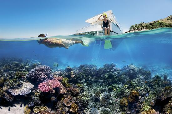 Snorkelling the Great Barrier Reef, Tropical North Queensland