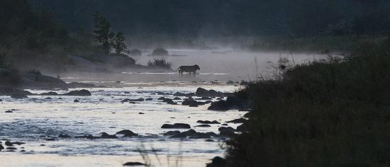 Amakhosi Safari Lodge: DAWN