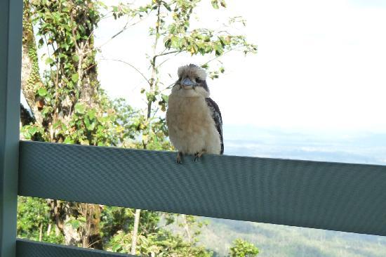 Eungella Mountain Edge Escape: Visiting Kookaburra