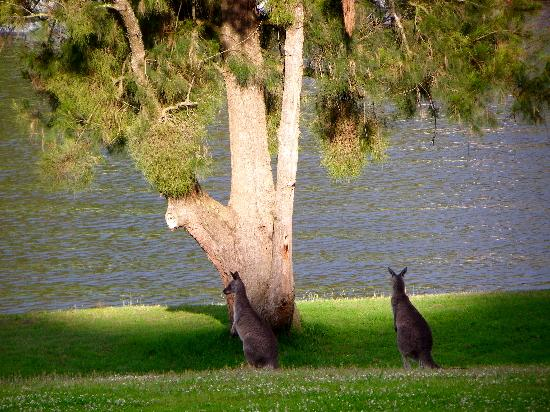 Shoalhaven Lodge: A roo with a view!