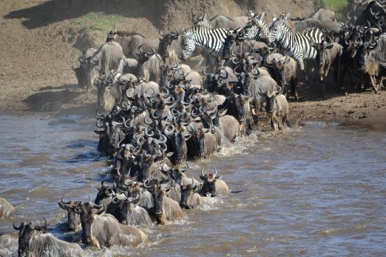 Kilima Camp: L'attraversata del fiume Mara