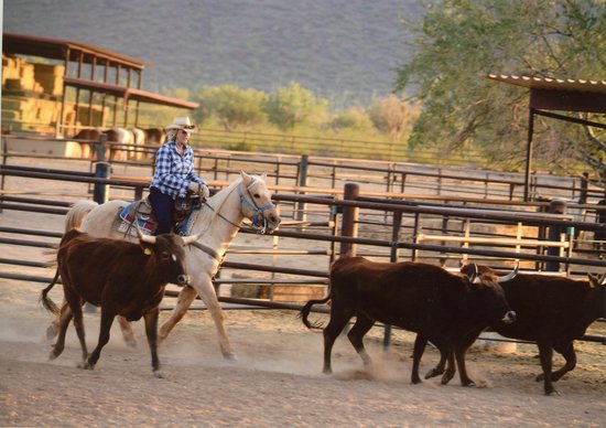 White Stallion Ranch: Penny team penning