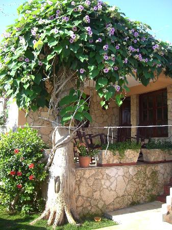 Casa Miguel: Terrace