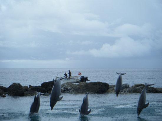 Dolphin Academy Curacao: show delfines