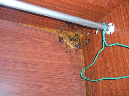 Phrueksa Beach Resort: More rot/mould in the cupboard