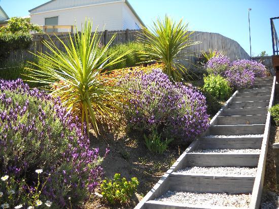 Criffel Peak View B&B and Apartment: garden