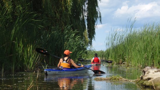 Dunnville, Canada: Guided Kayak Tours on the Grand River