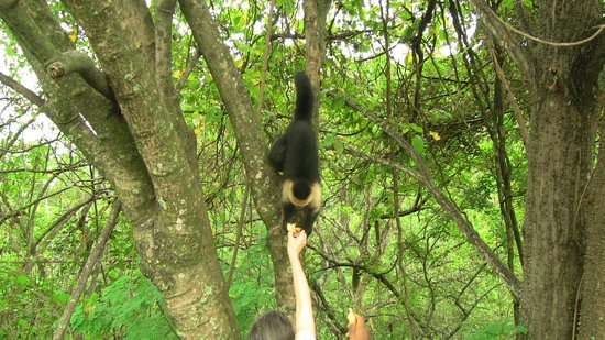 Feeding wild monkeys