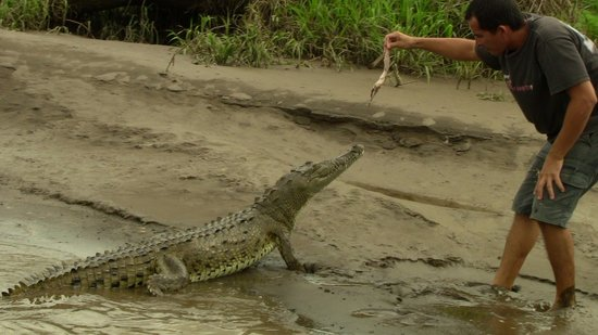 Ricky Ricardo Tours & Travels: Guide feeding crocodile...by hand!!